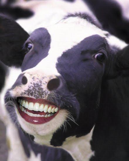 slay.one liens B_1_q_0_p_0.jpg?u=http%3A%2F%2F3.bp.blogspot.com%2F-GKLQm4d902Y%2FTb7FwEtahnI%2FAAAAAAAABi8%2FyJbdDC3EDAI%2Fs1600%2Ffunny_cow