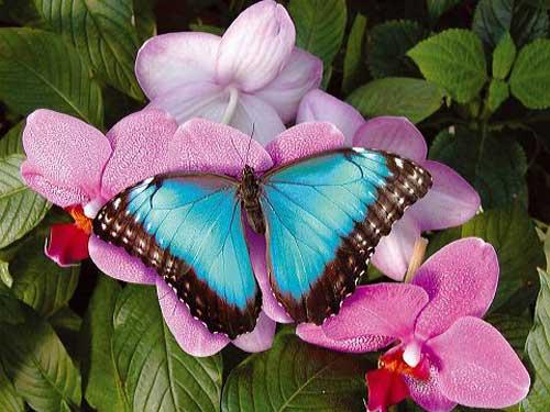 papillons de nuit  B_1_q_0_p_0.jpg?u=http%3A%2F%2Fkali95.k.a.pic.centerblog.net%2Fo%2F652c79d2