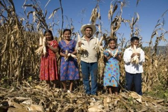 Photos from Increase family income of 50 Mexican farmers ...
