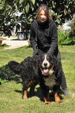 Chien - Elevage du berceau de bfamily - eleveur de chiens ...
