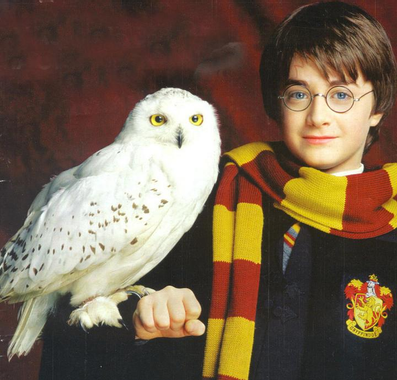 Gizmo   Harry Potter Wiki   FANDOM powered by Wikia