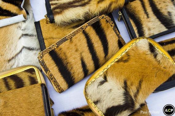 Los últimos tigres de Sumatra están acabando así… ¿Hasta ...