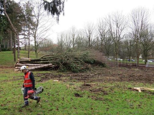 Yvelines. Un projet massif d'abattage d'arbres se prépare ...