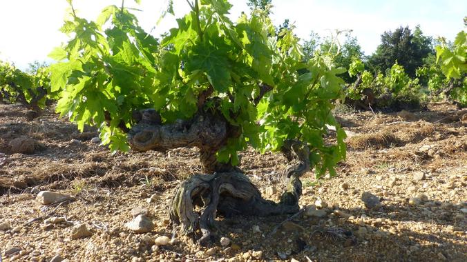 Les balades de Lison: 4ème balade en vignes