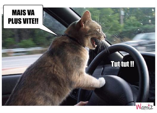 [16.05] Cat's Eye 4e1d4b7d09ac0.jpg?u=http%3A%2F%2Fstatic.wamiz.fr%2Fimages%2Fcomics%2Fstuffed%2Flarge%2F4e1d4b7d09ac0