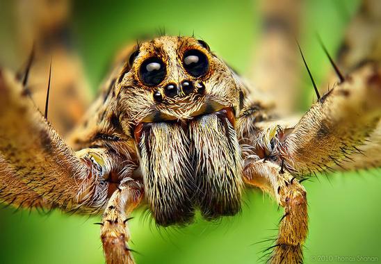 jumping-spiders-macro-photography-thomas-shahan-18.jpg?u=https%3A%2F%2Fwww.demilked.com%2Fmagazine%2Fwp-content%2Fuploads%2F2014%2F01%2Fjumping-spiders-macro-photography-thomas-shahan-18.jpg&q=0&b=1&p=0&a=1