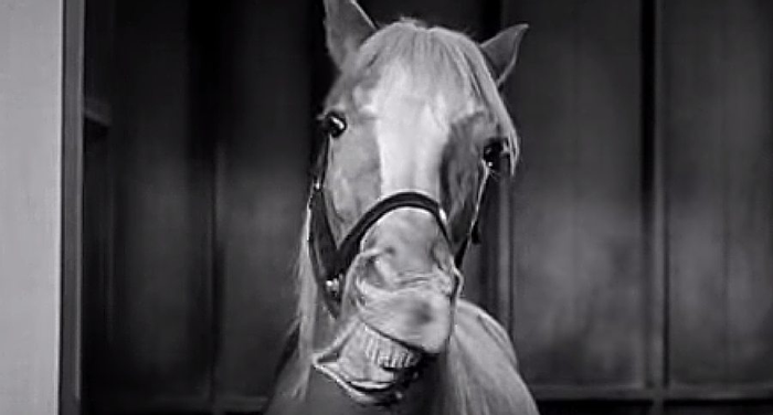 Mr. Ed the Talking Horse: Hollywood Secrets That You ...